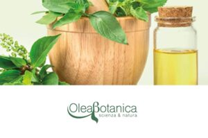 olea botanica eodis linea capelli